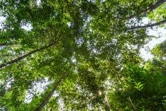 Niedrige Winkelsicht des Waldes Stockbild