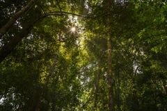 Niedrige Winkelsicht des Waldes Lizenzfreie Stockfotos
