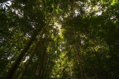 Niedrige Winkelsicht des Waldes Stockbilder