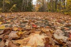 Niedrige Winkelsicht von den Blättern, die Carraige-Straße bedecken Lizenzfreie Stockbilder