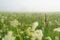 Niedrige Winkelsicht von meadov am nebeligen Morgen Lizenzfreies Stockfoto