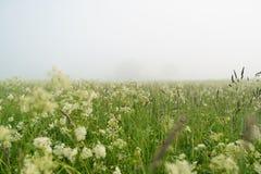 Niedrige Winkelsicht von meadov am nebeligen Morgen Stockfoto