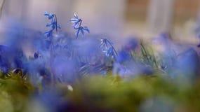 Niedrige Winkelsicht von purpurroten glockenförmigen Blumen mit unscharfem Vordergrund und selektivem Fokus stockfotos