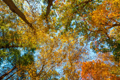 Niedrige Winkelsichtbäume Stockfoto