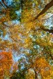 Niedrige Winkelsichtbäume Stockbilder