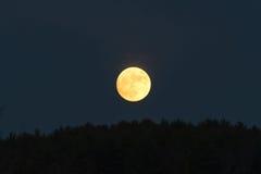 Niedriger goldener Mond im bewölkten Himmel gerade über der Baumgrenze Stockbild