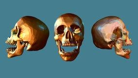 Niedriger Polyschädel in der verschiedenen Ansicht Lizenzfreies Stockbild