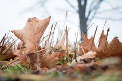 Niedriger Schuss der Nahaufnahme von Blättern und von Gras Lizenzfreie Stockfotos