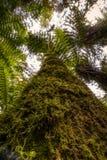 Niedriger Winkel des Baumstammes mit Moos lizenzfreie stockfotografie
