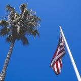 Niedriger Winkel-Foto einer Palme der amerikanischen Flagge und am Sommer-Tag Lizenzfreies Stockfoto