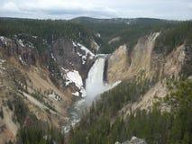 Niedrigere Yellowstone-Fälle Stockbilder