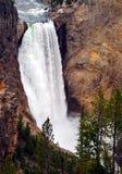 Niedrigere Yellowstone-Fälle stockbild