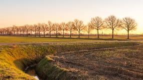 Niedriges Nachmittagssonnenlicht, das über einer ländlichen Landschaft durch a glänzt Lizenzfreie Stockfotos