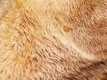 Niedźwiadkowa futerkowa tekstura Zdjęcia Stock