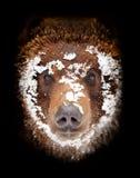 Niedźwiedź lubi target532_0_ Obrazy Stock