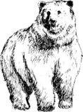 niedźwiedź rysująca ręka Zdjęcie Royalty Free