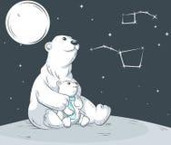 Niedźwiedzie w północy Fotografia Royalty Free
