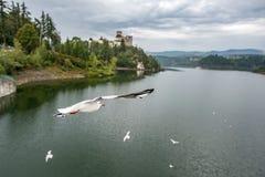 Niedzica Castle, Poland. Flying seagulls near Medieval Niedzica Castle, also known as Dunajec Castle. Poland royalty free stock images