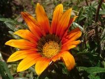 Niedziela Żółty kwiat zdjęcia royalty free