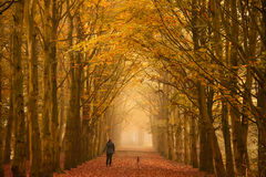 Niedziela rano spacer w jesieni Zdjęcie Royalty Free