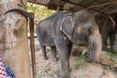Nieetyczna s?o? turystyka w Tajlandia zdjęcia royalty free