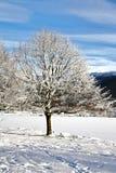 śnieg Fotografia Stock
