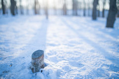Śnieg i drzewa Obraz Royalty Free