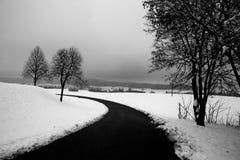 Śnieg i drzewa Fotografia Royalty Free