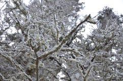 Śnieg 5 i drzewo Zdjęcie Royalty Free