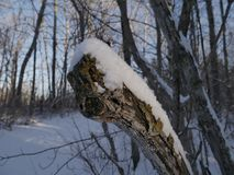 Śnieg i lód na drzewie Zdjęcie Royalty Free