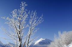 śnieg krajobrazu Zdjęcia Stock