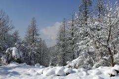 śnieg krajobrazu Fotografia Royalty Free