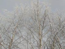 Śnieg na drzewach Zdjęcie Royalty Free