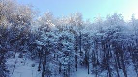 Śnieg na drzewach Obraz Stock