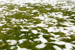 Śnieg na trawie Obrazy Royalty Free