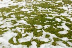 Śnieg na trawie Obraz Stock