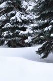 Śnieg pod drzewami Obrazy Royalty Free
