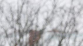 Śnieg spada na zima dniu zbiory