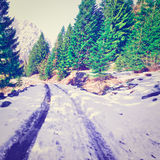 śnieg topnienia Zdjęcie Stock