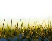 śnieg trawy. obrazy stock
