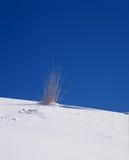 śnieg trawy. Zdjęcia Royalty Free