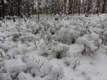 Śnieg w lesie Zdjęcia Royalty Free