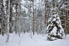 Śnieg w lesie Zdjęcie Stock