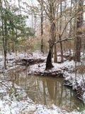 Śnieg w Luizjana zdjęcie stock