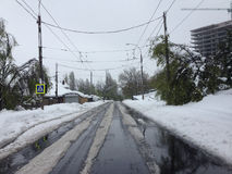 Śnieg w Maju Zdjęcie Stock