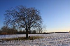 Śnieg w parku Obraz Royalty Free