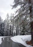 Śnieg w pinewood Zdjęcia Royalty Free