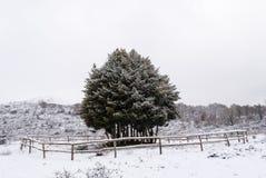 Śnieg w Sardinia Obrazy Royalty Free