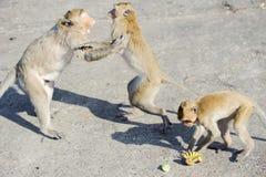 Niegrzeczna małpa 4 Zdjęcia Stock