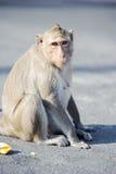 Niegrzeczna małpa 2 Fotografia Royalty Free